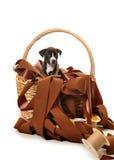 Merce nel carrello del cucciolo del pitbull dei nastri Fotografia Stock Libera da Diritti