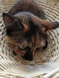 Merce nel carrello del gatto immagini stock libere da diritti