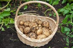 Merce nel carrello del raccolto della patata Immagini Stock Libere da Diritti