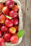 Merce nel carrello della ciliegia susina Fotografie Stock