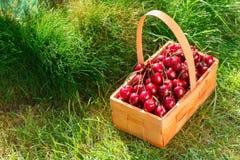 Merce nel carrello delle ciliege sull'erba Fotografie Stock