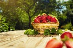 Merce nel carrello delle fragole sulla tavola di legno nello sfondo naturale, de Immagini Stock