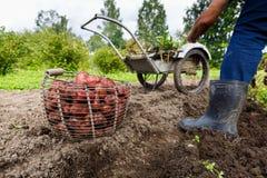 Merce nel carrello delle patate nel campo con l'agricoltore Fotografia Stock Libera da Diritti