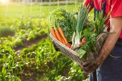 Merce nel carrello delle verdure Canestro della tenuta dell'agricoltore con le verdure Fotografia Stock