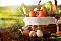 Merce nel carrello delle verdure su suolo con il fondo del paesaggio del raccolto tardi Immagini Stock