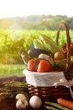 Merce nel carrello delle verdure su suolo con il verde del fondo del paesaggio del raccolto Immagine Stock Libera da Diritti