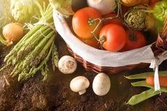 Merce nel carrello delle verdure su suolo con la cima del fondo del paesaggio del raccolto Fotografie Stock