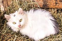 Merce nel carrello di menzogne del gatto con fieno fotografia stock libera da diritti