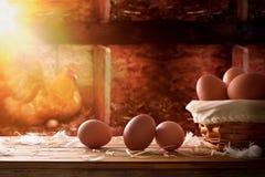 Merce nel carrello di recente selezionata delle uova all'interno di un fondo del pollaio Fotografie Stock