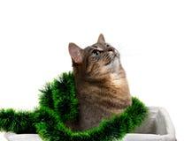 Merce nel carrello di seduta del gatto grigio con il lamé e cercare di Natale Fotografie Stock
