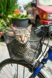 Merce nel carrello di seduta del gatto sulla bicicletta Fotografie Stock Libere da Diritti