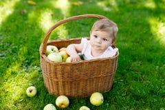Merce nel carrello di seduta della neonata sveglia in pieno con le mele mature su un'azienda agricola in autunno in anticipo Fotografia Stock