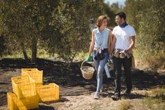 Merce nel carrello di trasporto delle olive delle coppie felici all'azienda agricola il giorno soleggiato Fotografie Stock