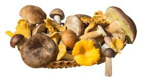 Merce nel carrello differente dei funghi isolata su fondo bianco Fotografia Stock Libera da Diritti