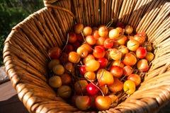 Merce nel carrello fresca gialla della ciliegia Vista superiore, ciliege più piovose Bacche in un canestro di vimini Tempo di rac immagini stock