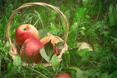 Merce nel carrello matura sull'erba, fuoco selettivo delle mele Fotografia Stock