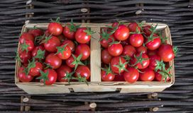Merce nel carrello matura variopinta fresca dei pomodori di cimelio di caduta sopra fondo di legno, vista superiore, composizione fotografia stock libera da diritti