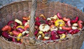 Merce nel carrello multicolore delle lampadine di gladiolo Fotografie Stock Libere da Diritti