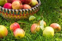 Merce nel carrello organica delle mele, meleto fotografie stock