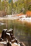 merced河树桩结构树 库存图片