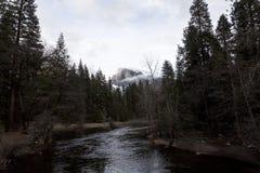 Merced flod som flödar till och med träd med Halfdome i bakgrund Royaltyfri Foto