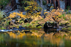 Merced River in Autumn. Autumn colors along the Merced River in Yosemite Valley - Yosemite National Park, California Stock Image