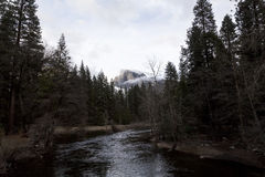 Merced River Flowing Through Trees With Halfdome In Background Royalty Free Stock Photo