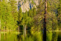 Merced River landscape in Yosemite Stock Photos