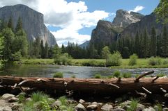 merced River Valley yosemite Стоковые Фото