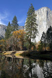 Merced River, Yosemite. Fall leaves log jammed on the Merced River, Yosemite National Park, El Capitan in background, perfect blue sky day Stock Photography