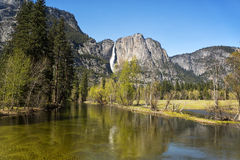 Merced River and Yosemite Falls. The Merced river in Yosemite Valley with the Yosemite Falls in the background royalty free stock images