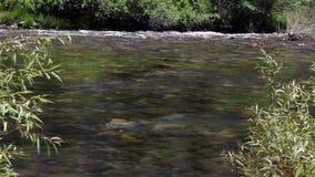 Merced Rzeczny spływanie W Yosemite Kalifornia Zielonych roślinach zbiory wideo
