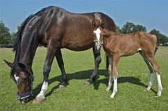 MERCEDES AND IT'S ME. MOTHER AND CHILD DURING THE SUMMER OF 2013 ON A DUTCH HORSEFARM, DE STAP Royalty Free Stock Photo