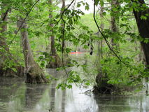 Merchant Mill State Park Swamp with Red Canoe. In North Carolina Stock Photos