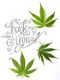 Merci carder avec des feuilles de marijuana photo stock