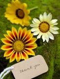 Merci fond, fleur de marguerite photos libres de droits