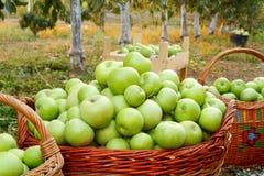 Merci nel carrello delle mele fotografia stock libera da diritti
