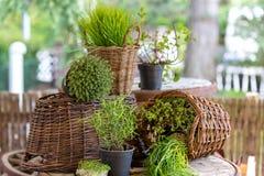Merci nel carrello di erbe dell'insieme Fotografia Stock Libera da Diritti