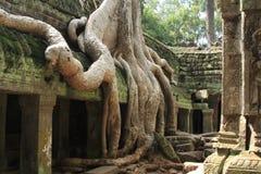 Merci temple Cambodge d'angkor de Prohm Image libre de droits