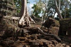 Merci temple de Prohm. Angkor. Cambodge Photo libre de droits