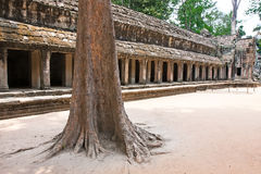Merci temple de Prohm, Angkor Vat, Cambodge Photos stock