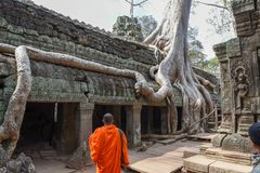 Merci temple de Prohm au complexe d'Angkor Vat, Siem Reap, Cambodge Photos stock