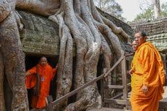 Merci temple de Prohm au complexe d'Angkor Vat, Siem Reap, Cambodge Images libres de droits