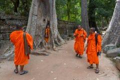 Merci temple de Prohm au complexe d'Angkor Vat, Siem Reap, Cambodge Photographie stock libre de droits