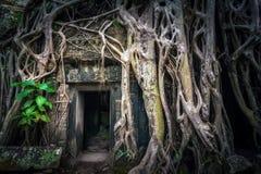 Merci temple de Prohm avec le banian géant Angkor Wat, Cambodge Photo libre de droits