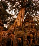 Merci temple de Prohm dans Angkor Tohm Image stock