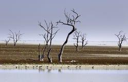 Meren Australië van Menindee van Mystrious de dode bomen Royalty-vrije Stock Fotografie