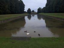 meren groen gras royalty-vrije stock afbeeldingen