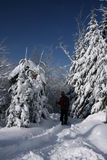 Merge into scenery. Picture taken during a snowshoeing ride at north of Quebec city Stock Photography