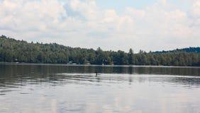 Mergulhão-do-norte no lago fotos de stock royalty free